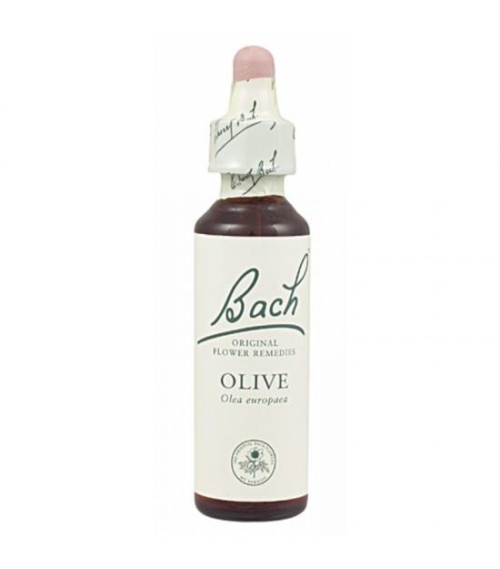 FLOR BACH olive 20 ml Nº23